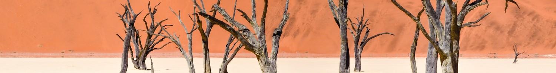 Dead Vlei by J. Bdodane