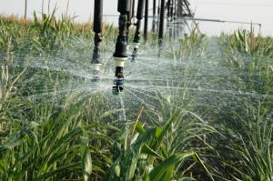 Irrigation, source: AgriLife Today