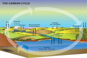 Carbon Cycle, source: BGS