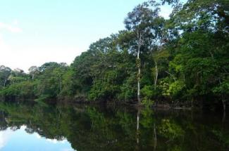 Amazonas by Andres M.