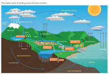 The Water Module: Poster - Water cycle, including human activity